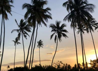 Marafiki Bungalows Picture