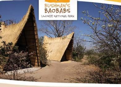Bushmans Baobab Picture