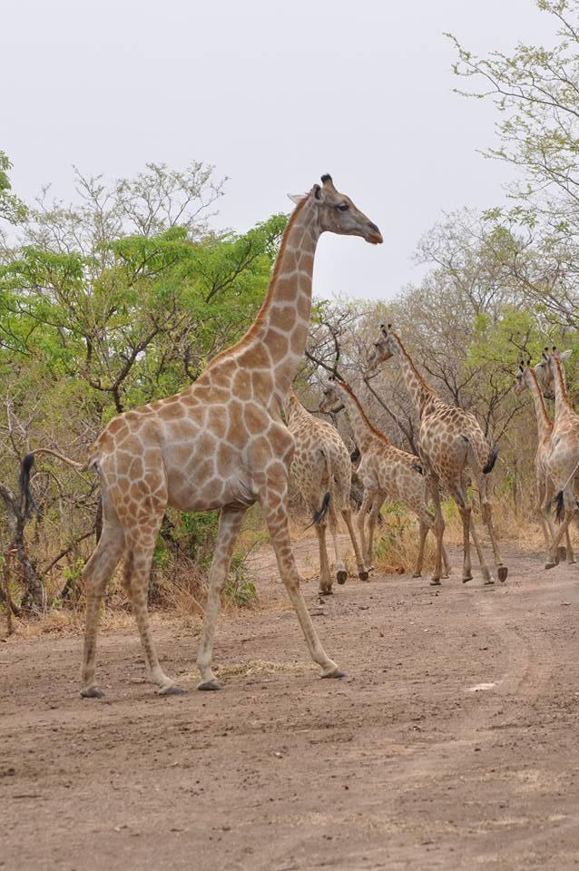 Sumu Wildlife, Bauchi