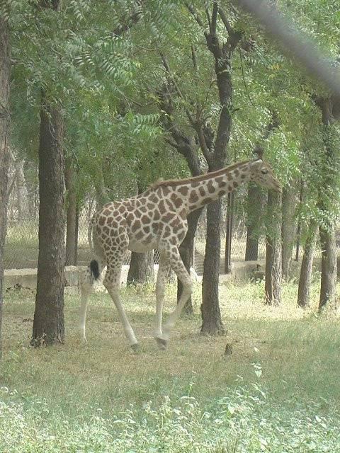 Audu Bako Zoo