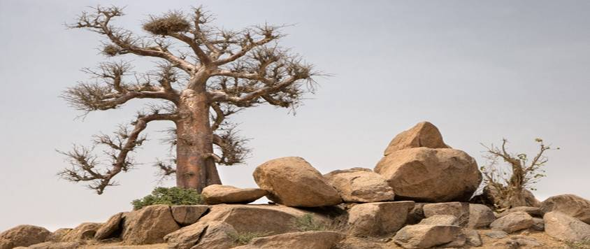 The Chad Basin National Park