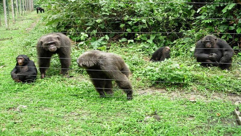 Afi Mountain Wildlife Sanctuary1