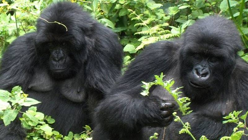 Afi Mountain Wildlife Sanctuary4
