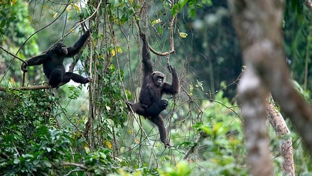 Afi Mountain Wildlife Sanctuary