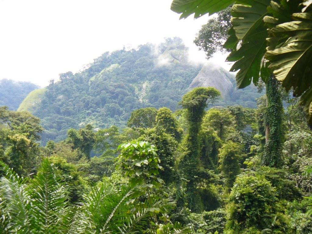 Afi Mountain Wildlife Sanctuary2