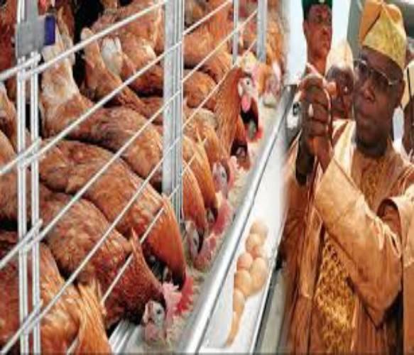 Obasanjo Farm