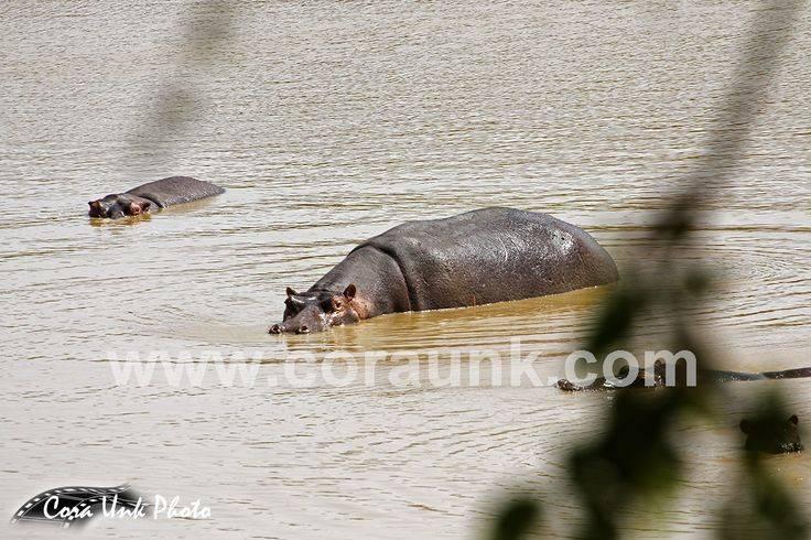 Kalale Hippopotamus Pond