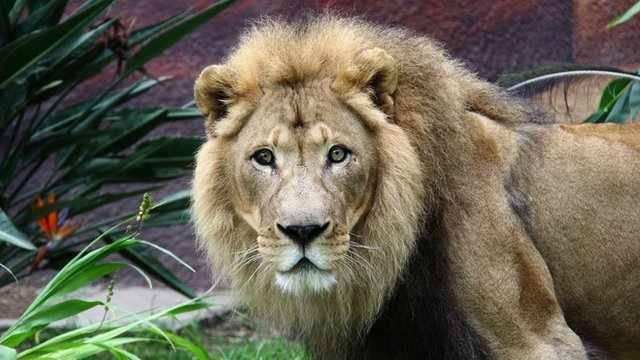 Owerri Zoo